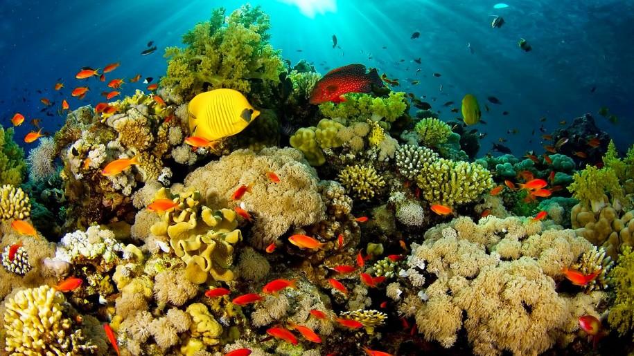 (STUDIU) Temperaturile oceanelor cresc mai repede decât se credea