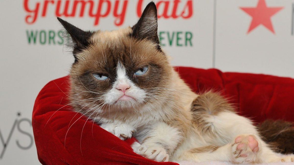Cea mai faimoasă pisică din lume a murit