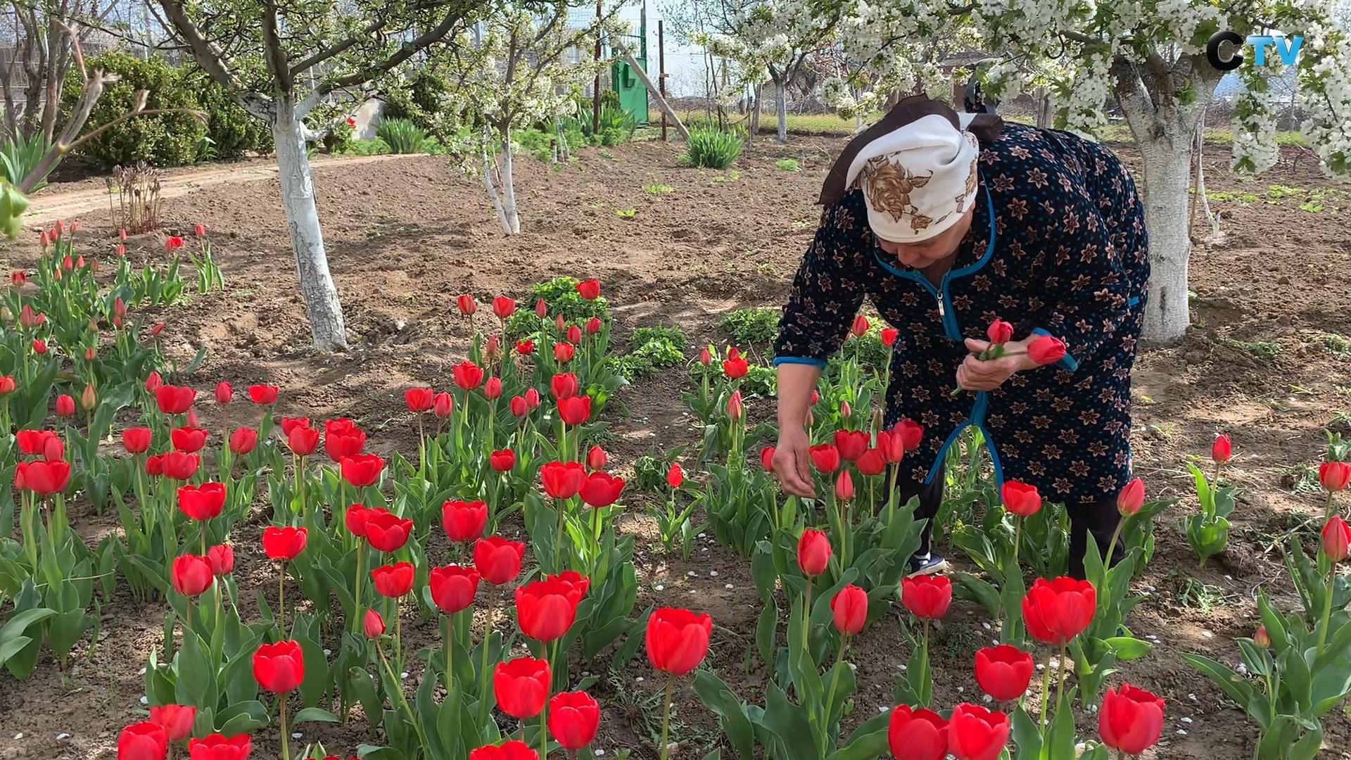 Mătușa Parascovia în grădina sa din Sângera. FOTO: Mihaela Baciu